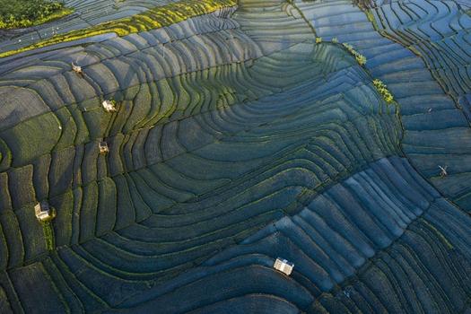 Bali-rice-paddy-above