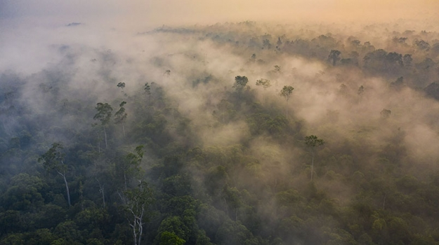 Borneo-rainforest-smog